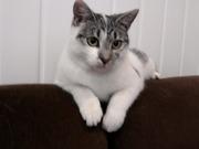 Славная кошечка очень хочет обрести дом!