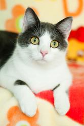 Хороший котик Томас ищет родителей