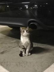Нужна помощь котику!!!