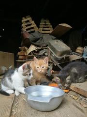 Котята (2 месяца)